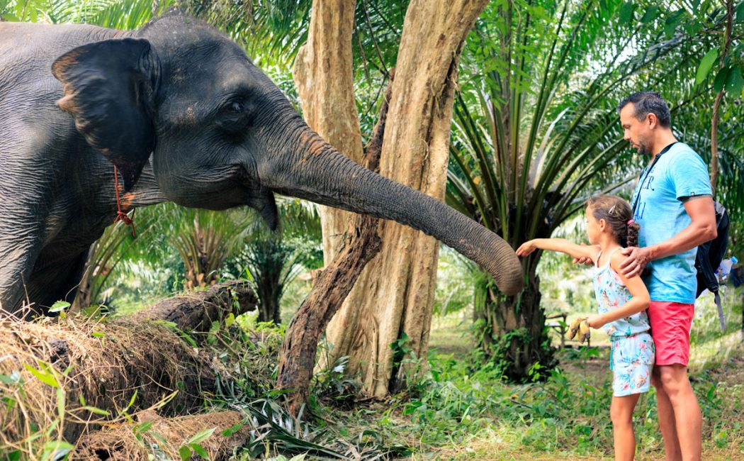 Feed an elephant after learning about its diet